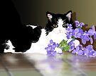 Cherokee Kitty by melasdesign