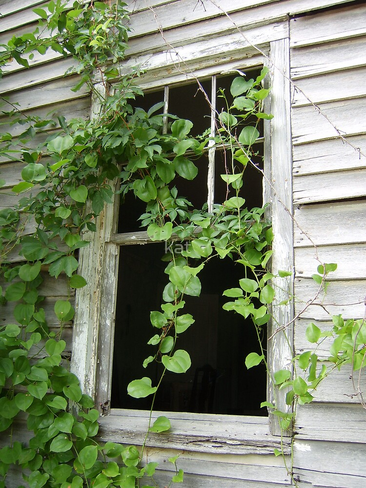 Over grown window by kat  -