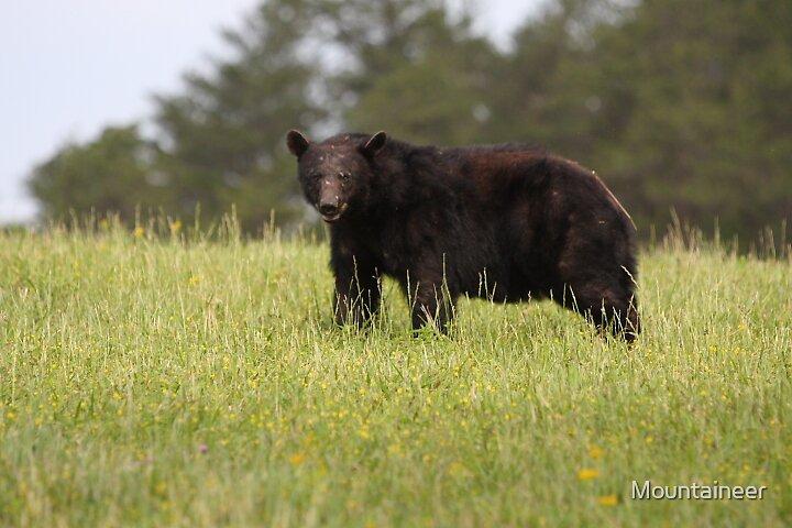 Black bear by Mountaineer