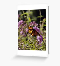 """--'Designs of a Butterfly"""" Greeting Card"""
