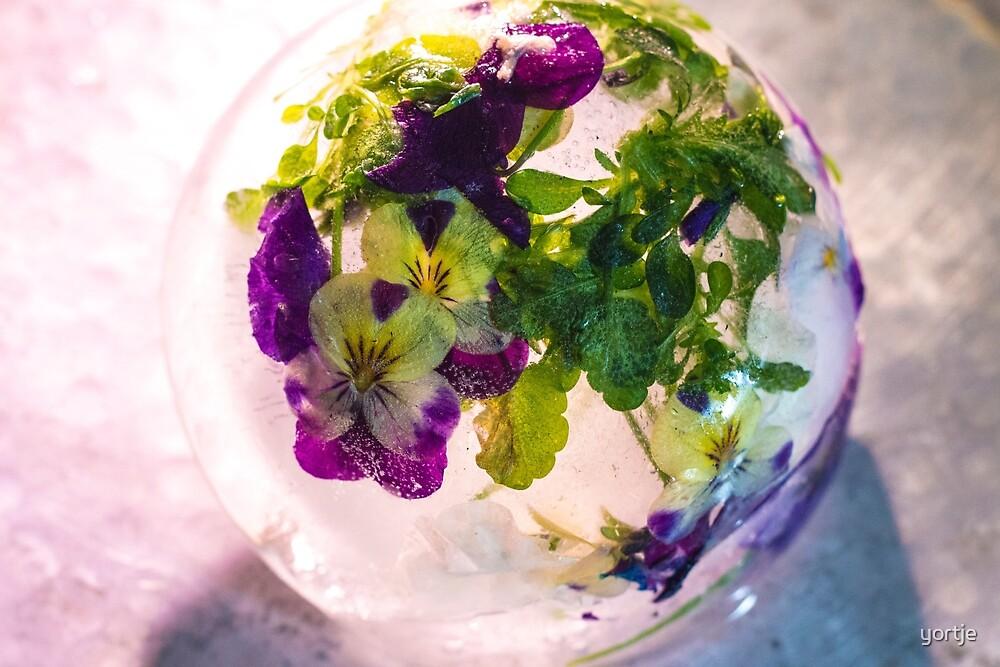 violets by yortje