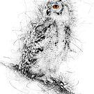Owl Sketch by Ann Garrett