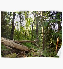 Downed Trees  Poster