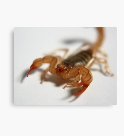 Household  Scorpion Canvas Print
