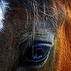 A Horse's .... by Al Bourassa