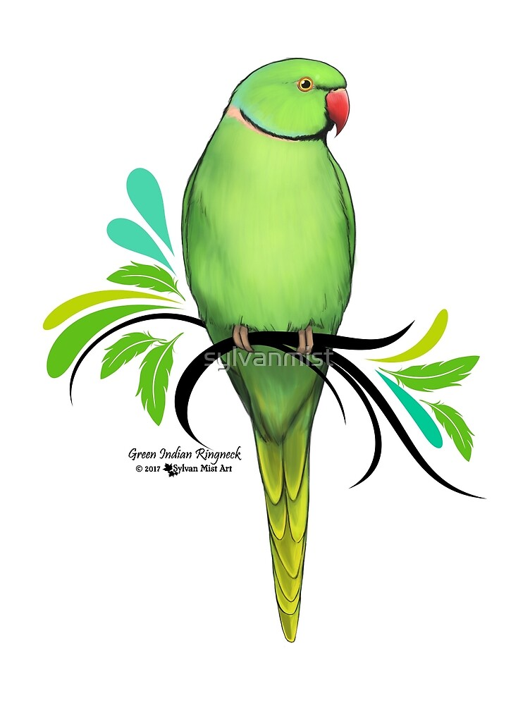 Green Indian Ringneck Parrot by sylvanmist