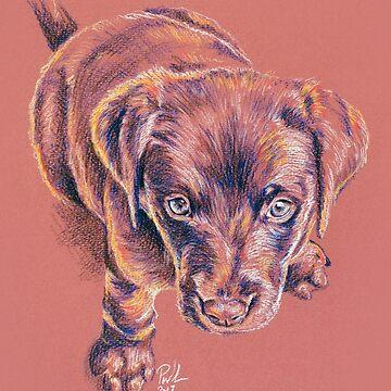 Puppy Dog Eyes by Paul-M-W