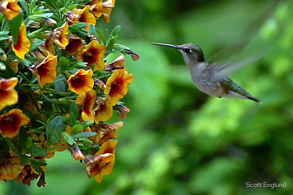 Humming bird by Scott Englund