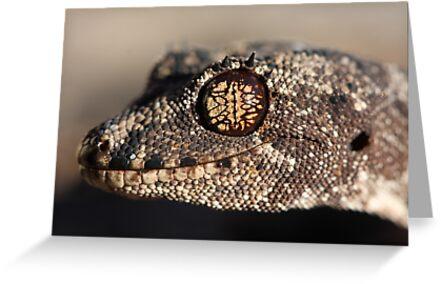Katherine form Spiny-tailed Gecko by Steve Bullock