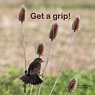 Get a grip! by Alice Kahn