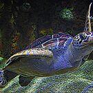 «Tortuga marina Narly Dude» de Paulette1021