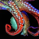 Octopus by Paulette1021