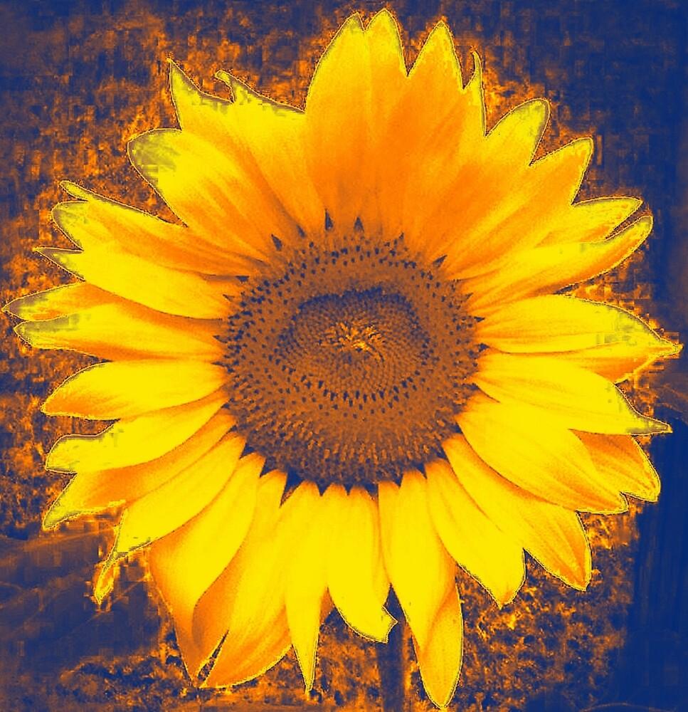 Sunflower by lizwaitinas
