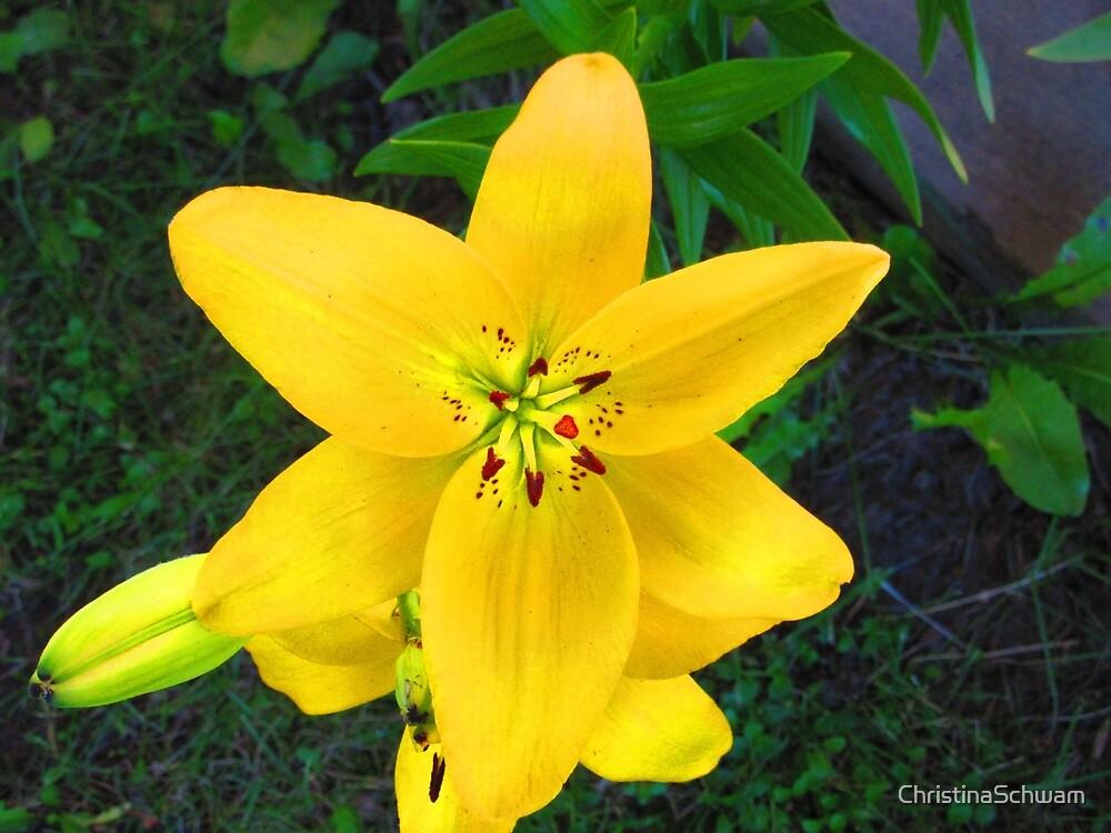 Sunny side of a flower by ChristinaSchwam
