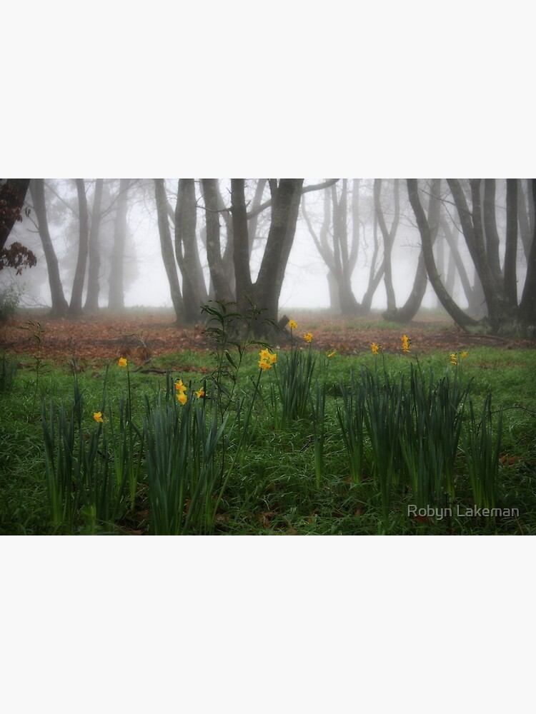 Winter daffodils by Rivergirl
