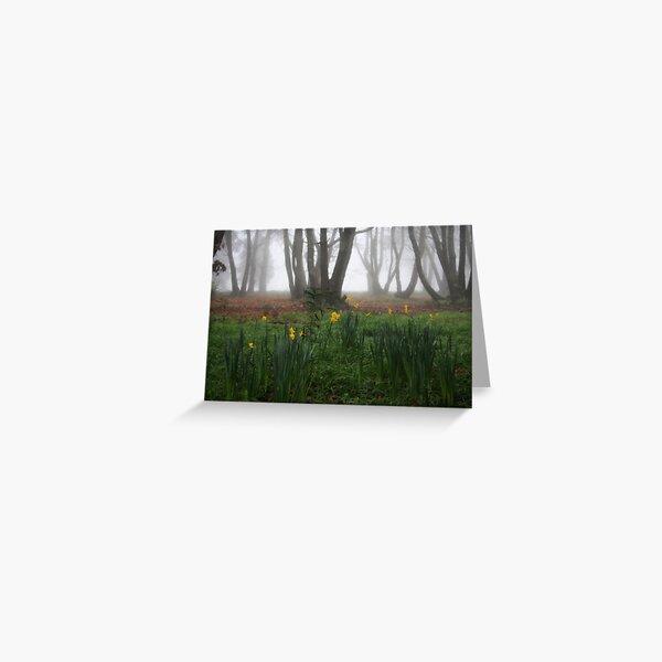 Winter daffodils Greeting Card