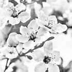 Frucht oder Blume? von Caitlyn Grasso