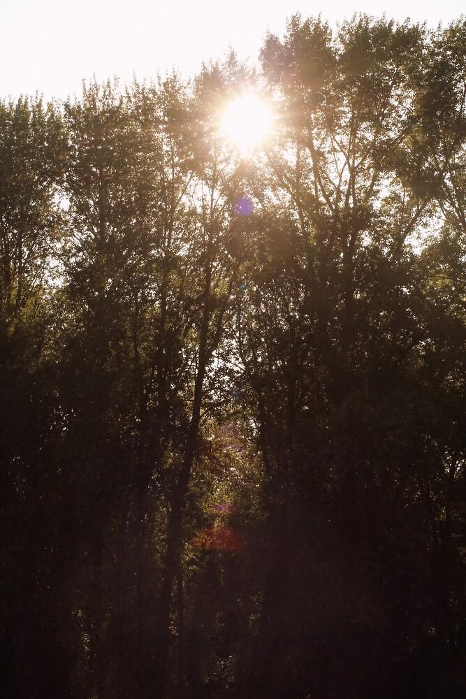 morning sun through treetops Trojan pond, near Goble, Oregon by Dawna Morton