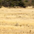 Four ostrich, two blesbuck and a........ secretary bird? by Antionette