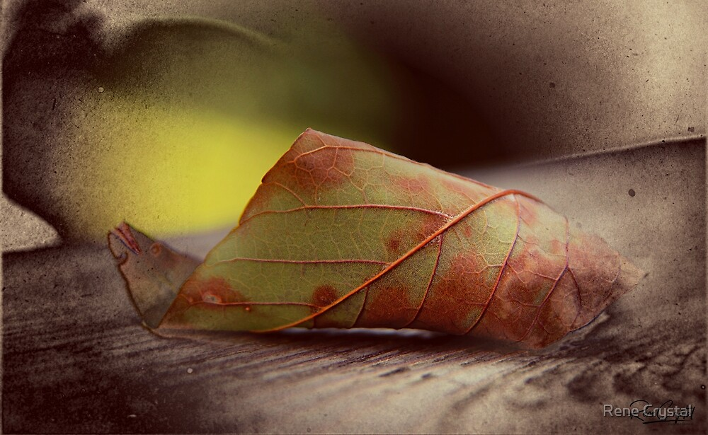 Rolling Over for the Fall by Rene Crystal