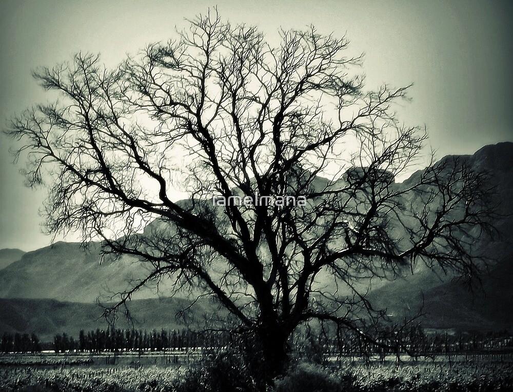 Seasonal rest for an oldtimer by iamelmana