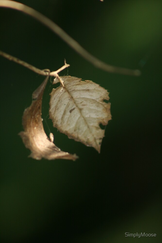 Leaf on branch by SimplyMoose