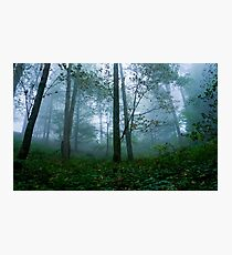 Misty Forest - Photography - Nature Photographic Print