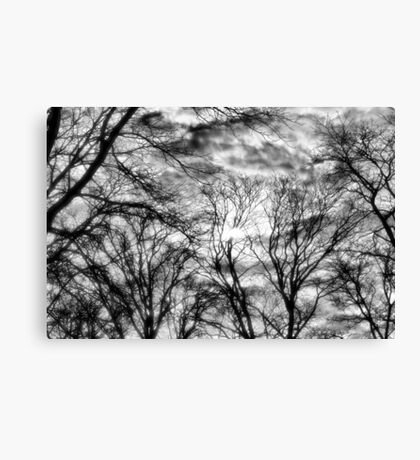 Sun, Clouds, and Winter Trees Canvas Print