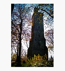 Tower of Trees Photographic Print