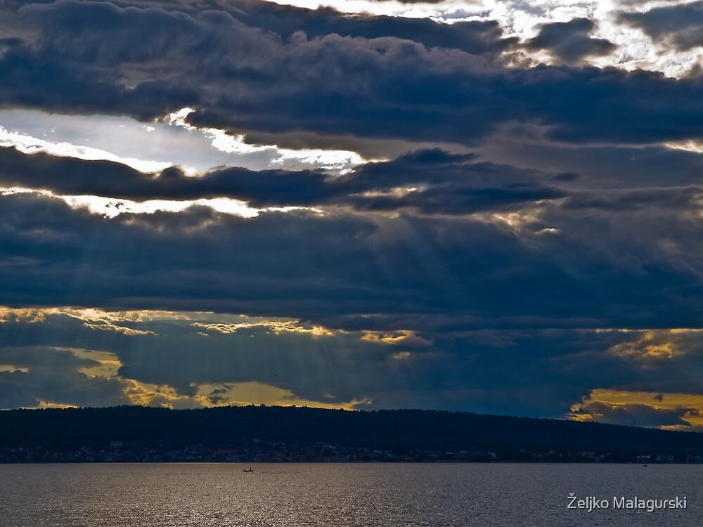 Morning Glory ,last by Željko Malagurski