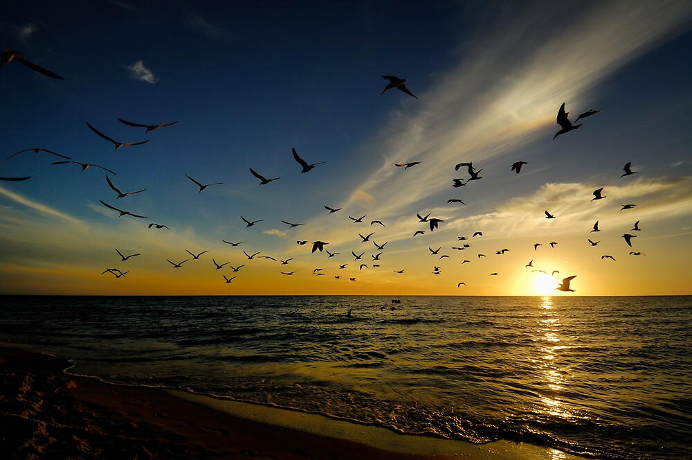 Birds at Sunset by Glenn Barnett