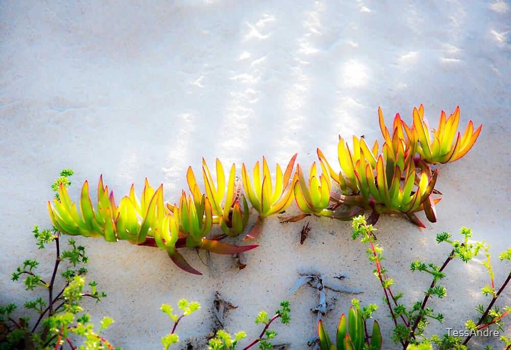 Dunes by TessAndre