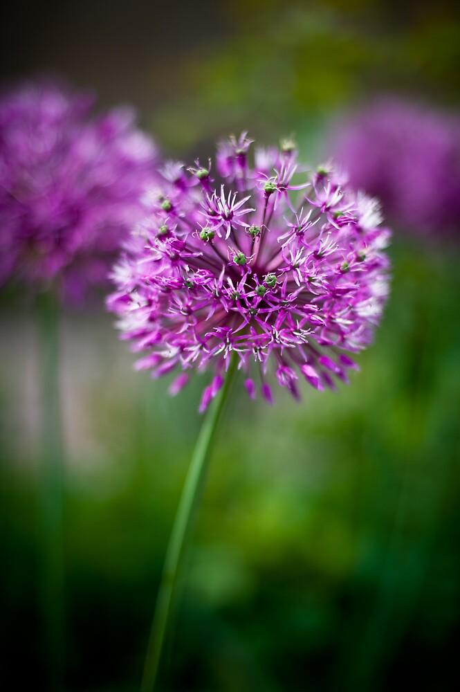 Purple and Green by Glenn Barnett