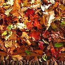 Fallen Leaves by Judi FitzPatrick