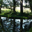 Reflection by Maureen Brittain