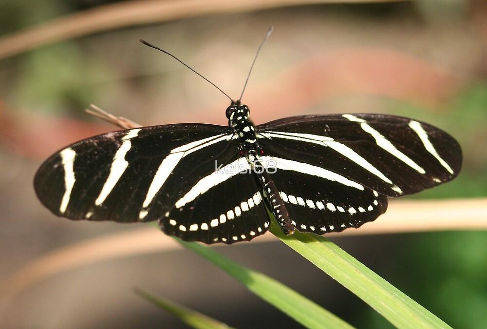 Butterfly by kelsi68