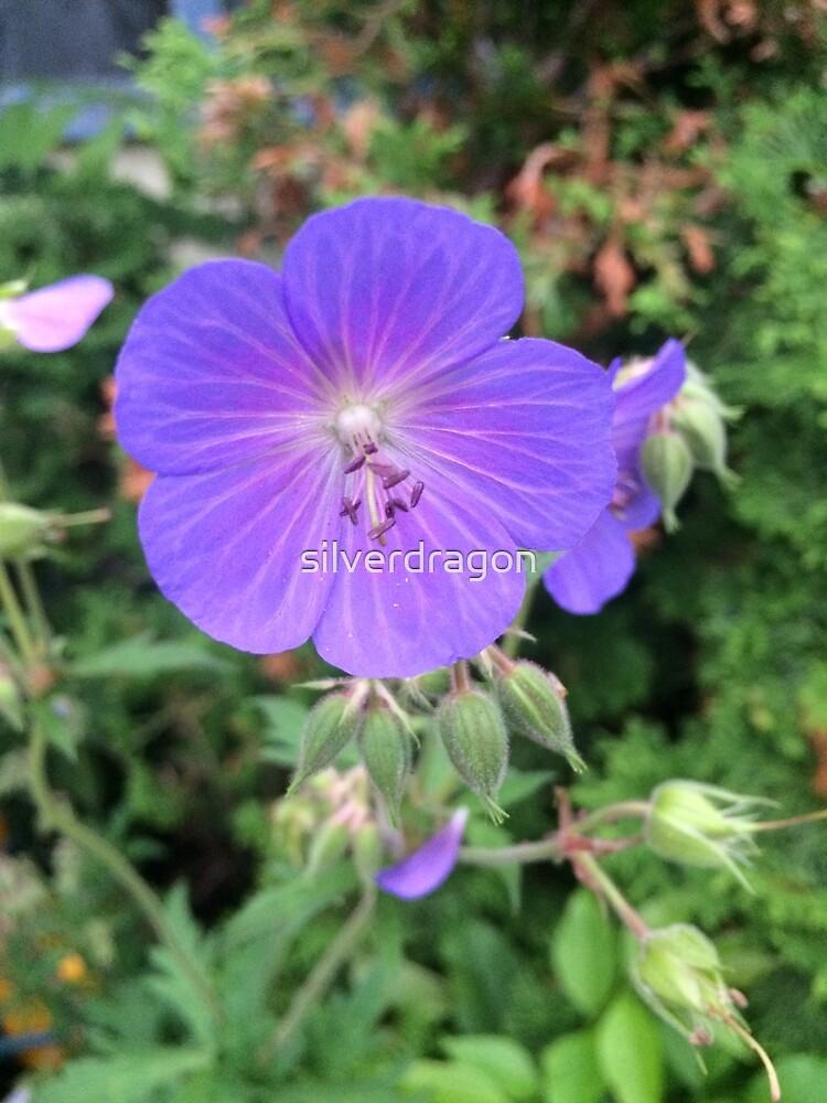 Wild Geranium Flower by silverdragon