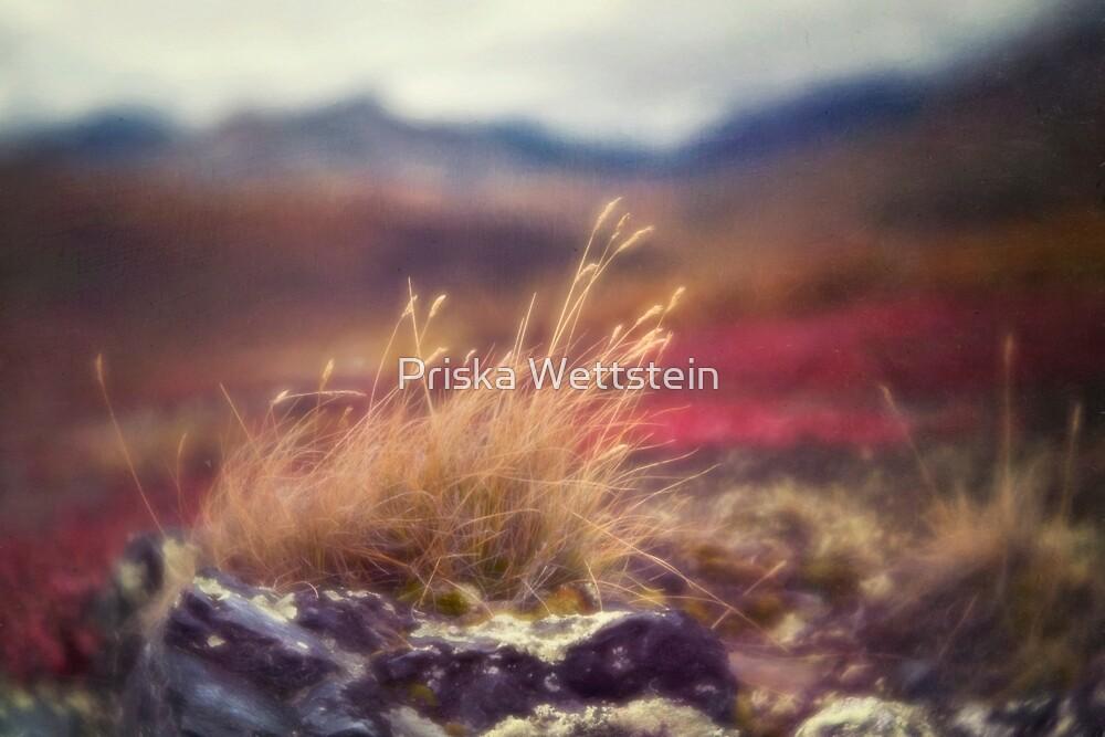 Autumn Grass by Priska Wettstein