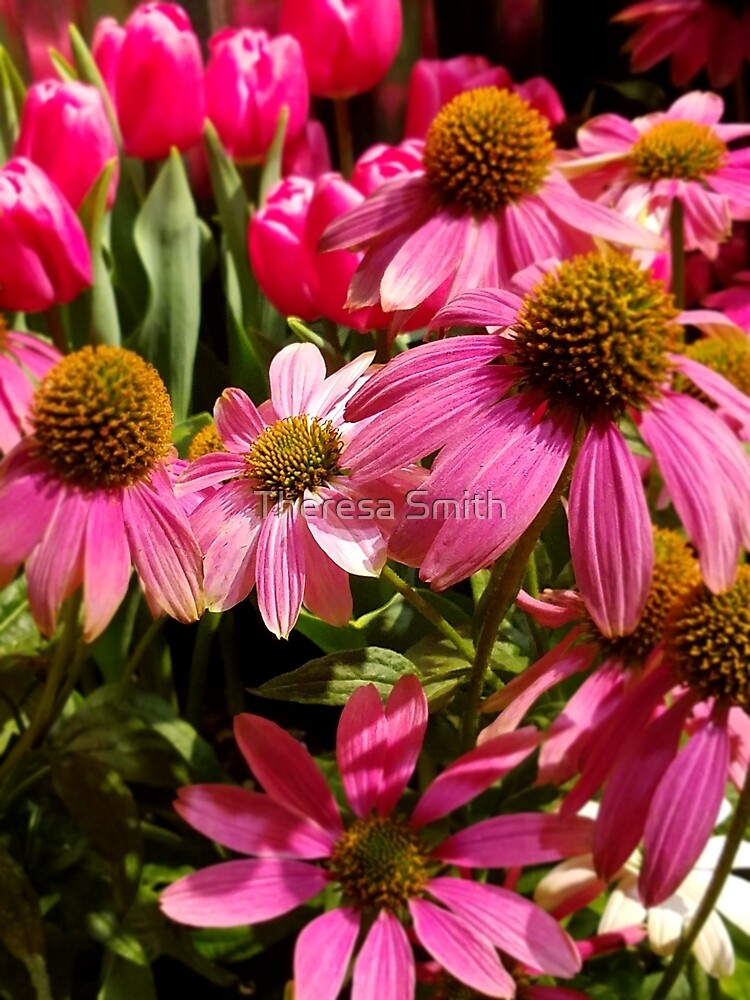 Coneflowers by Theresa Smith