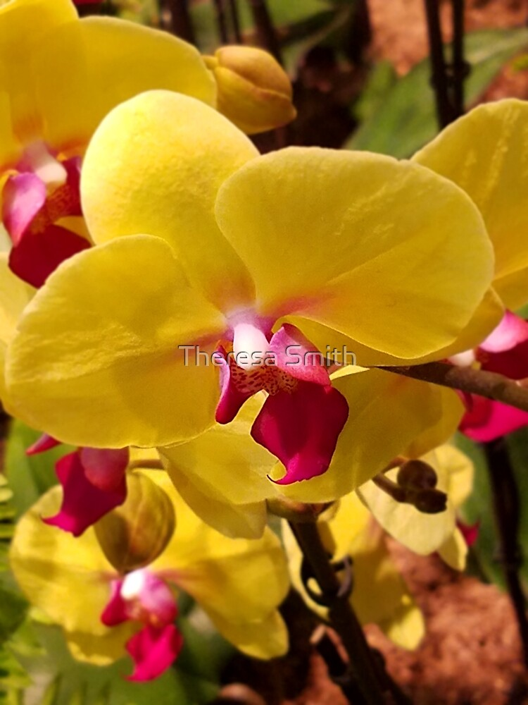 Orchids by Theresa Smith