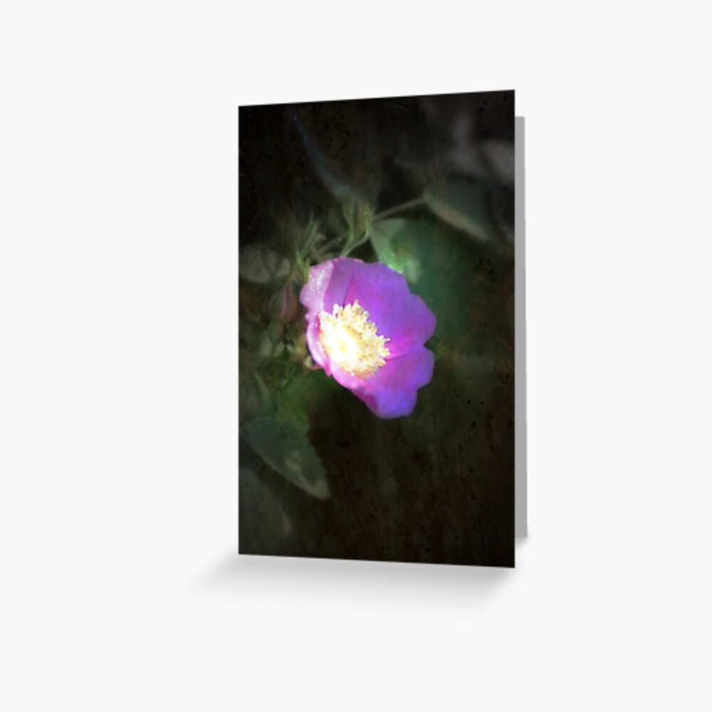 glowing old fashioned rose elegance Greeting Card