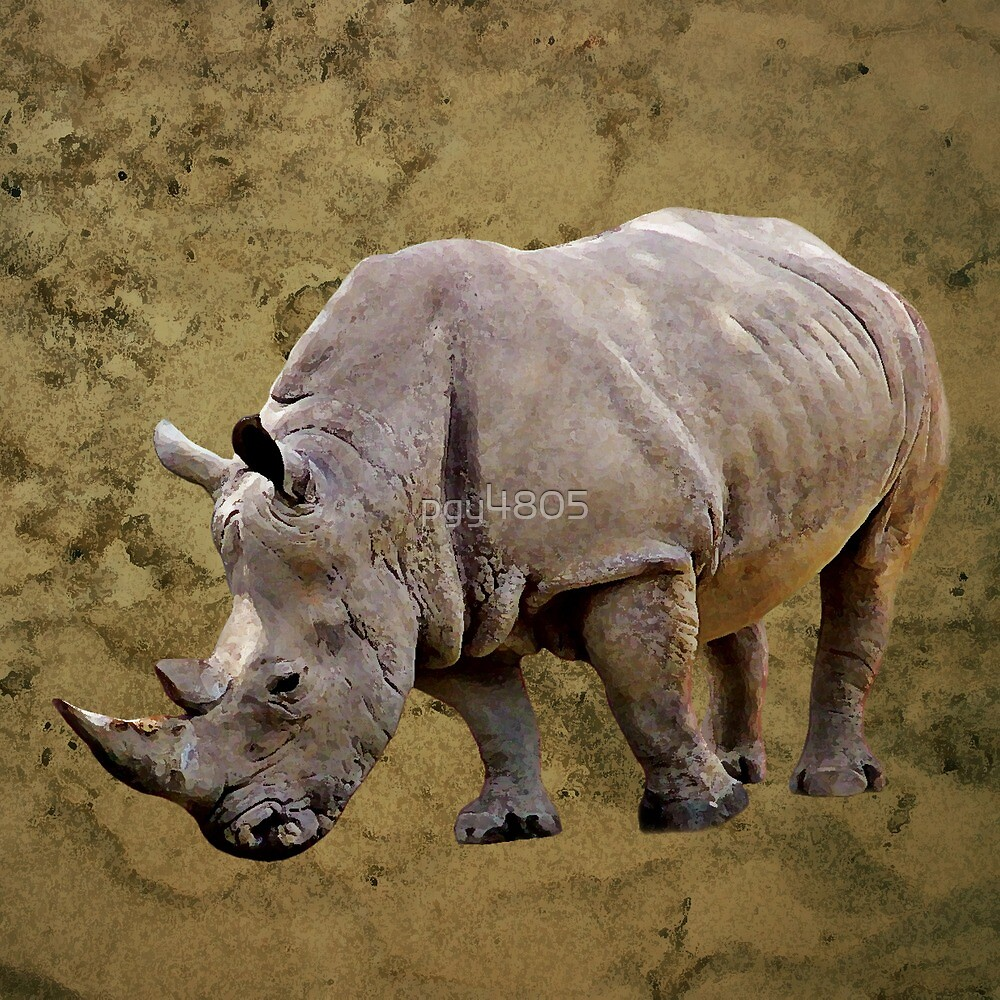 Rhinoceros by pgy4805