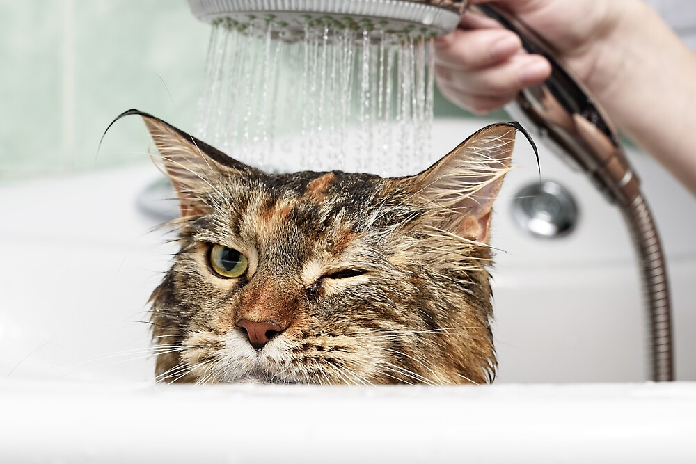 Cat bath by OllegNik