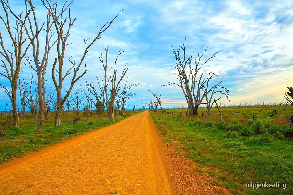 Road Around the  wetlands... by mitpjenkeating
