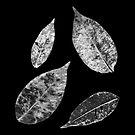 skeletal leaves scanogram by Janine Paris