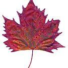 autumn leaf scanogram by Janine Paris