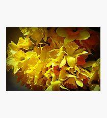 *Daffodils at the Market* Photographic Print
