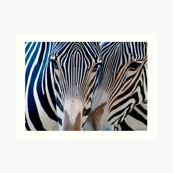 Zebra Patterns Art Print