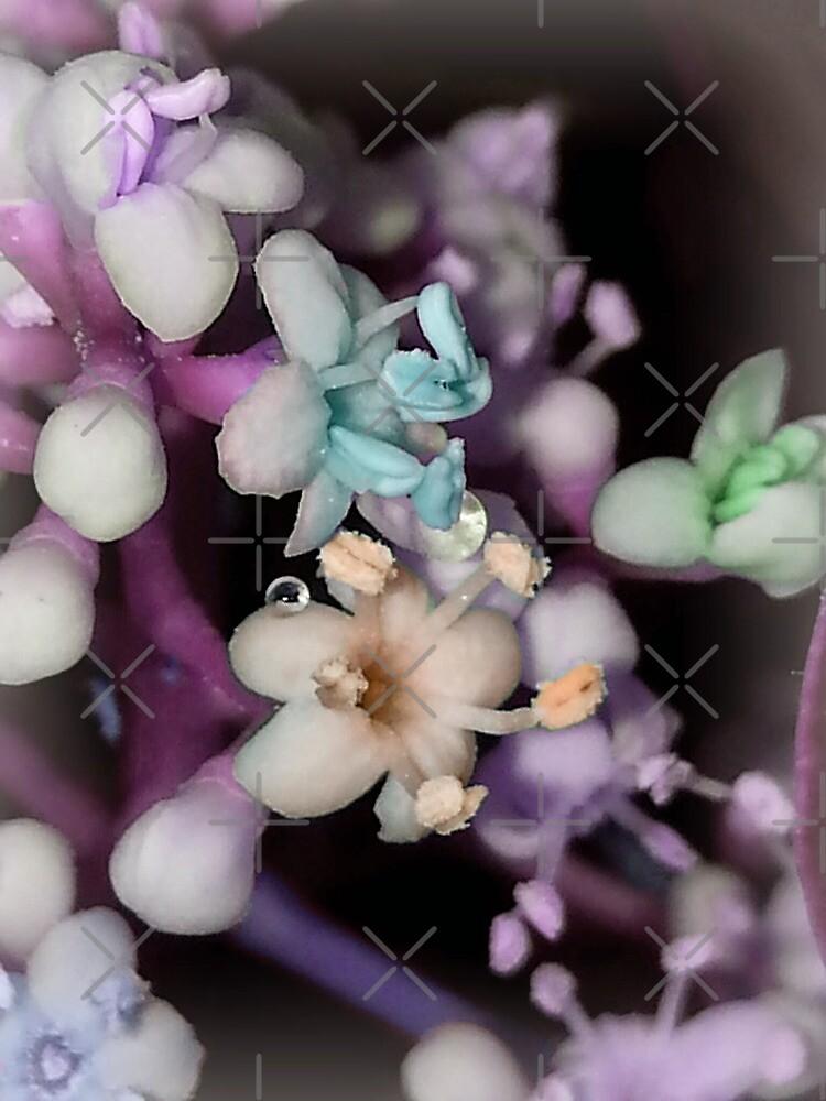 Luminous Pastel Flowers by Bettinas
