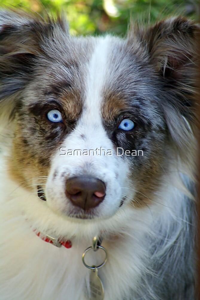 Ice Blue Eyes by Samantha Dean